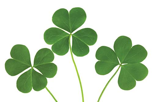 The Aztec's St. Patrick's Day guide