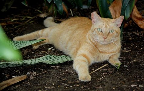 Faculty, staff care for 'Aztec Cats'