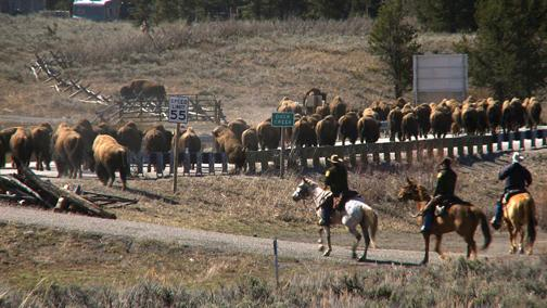 Killing is not the answer to bison expansion
