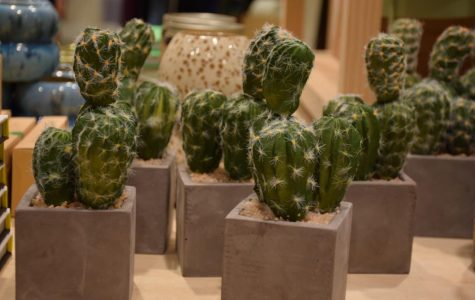 Plants can be woven into dorm room decor without plant growing skills and dedication by purchasing faux cacti and succulents. (Urban Outfitters, $14).
