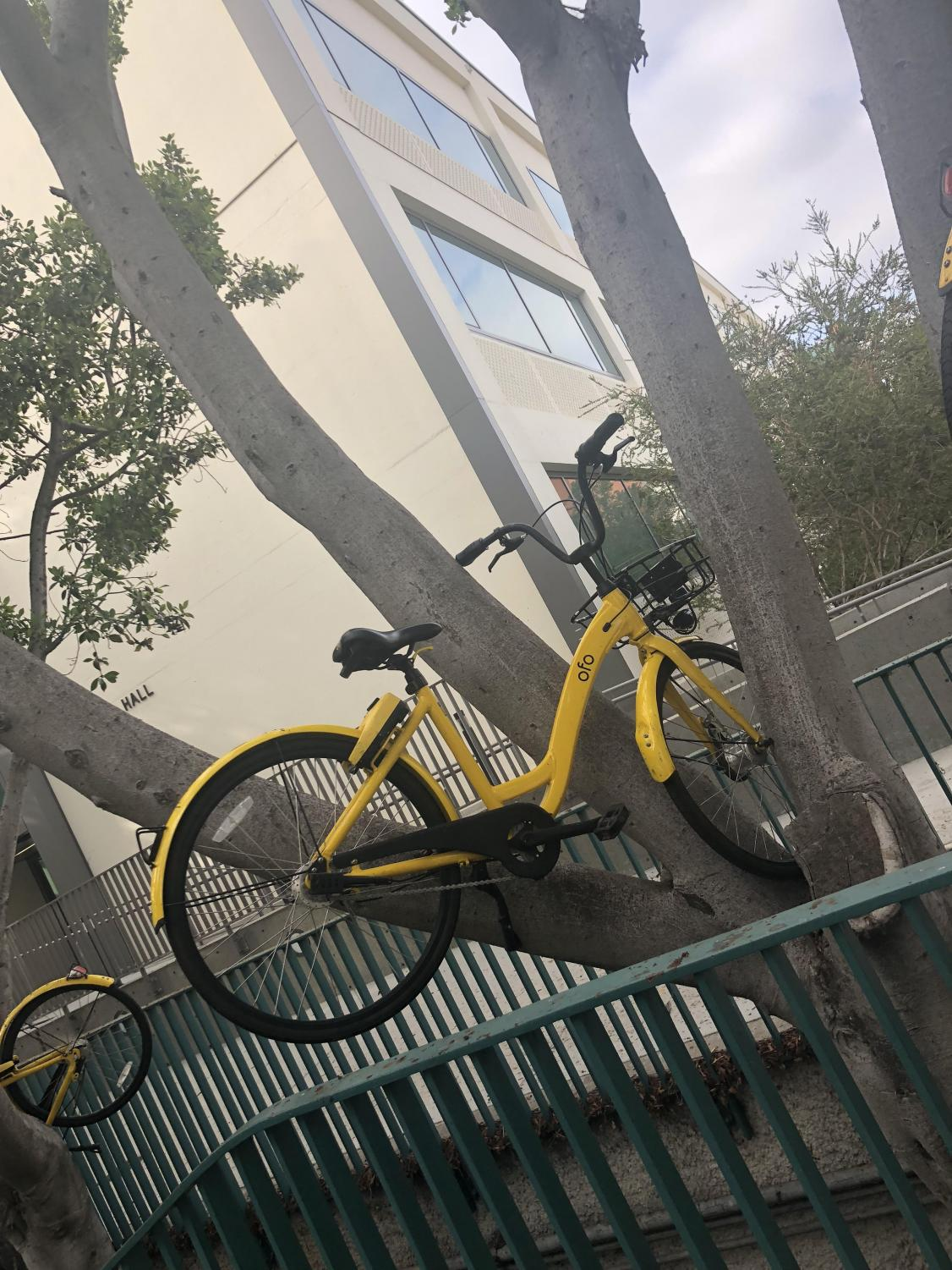 An Ofo bike thrown into a tree near West Commons on Wednesday.