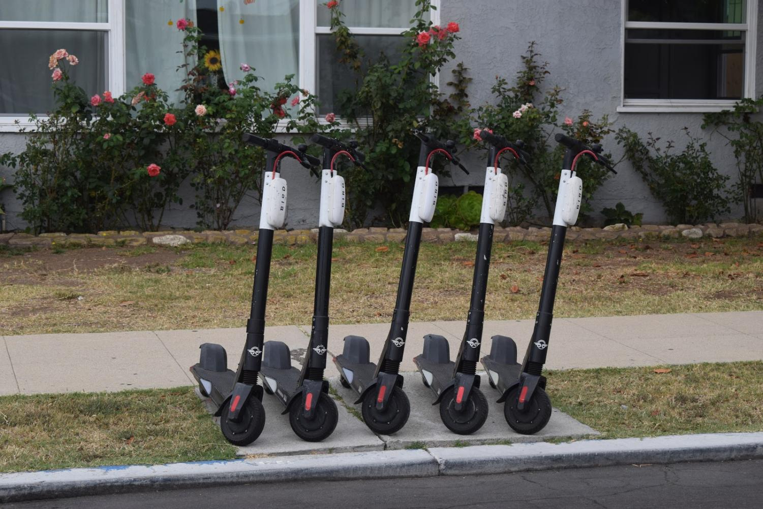 Bird scooters parked on a residential street in the College Area.