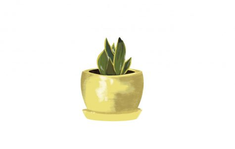 Indoor plants are perfect for dorm decor
